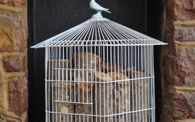 More about the Cages…