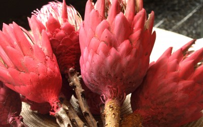 Annie Sloan Painted Proteas – Dried and Re-invented