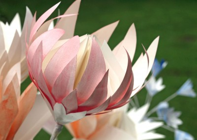 Painted Pink Proteas