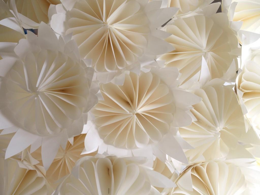 Textured White Proteas